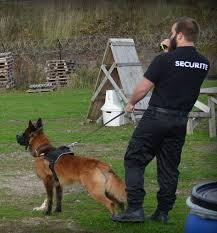 maitre-securite-chien